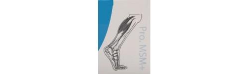 Articulações/ Músculos/Ossos
